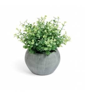 Gėlės ir vazonai