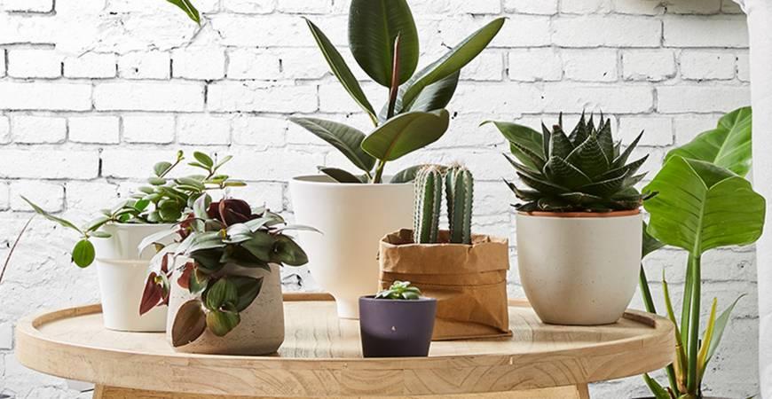 Džiunglių namai: augalai kiekviename kambaryje